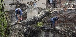 Powalone drzewo znika z ul. Rewolucji 1905r.