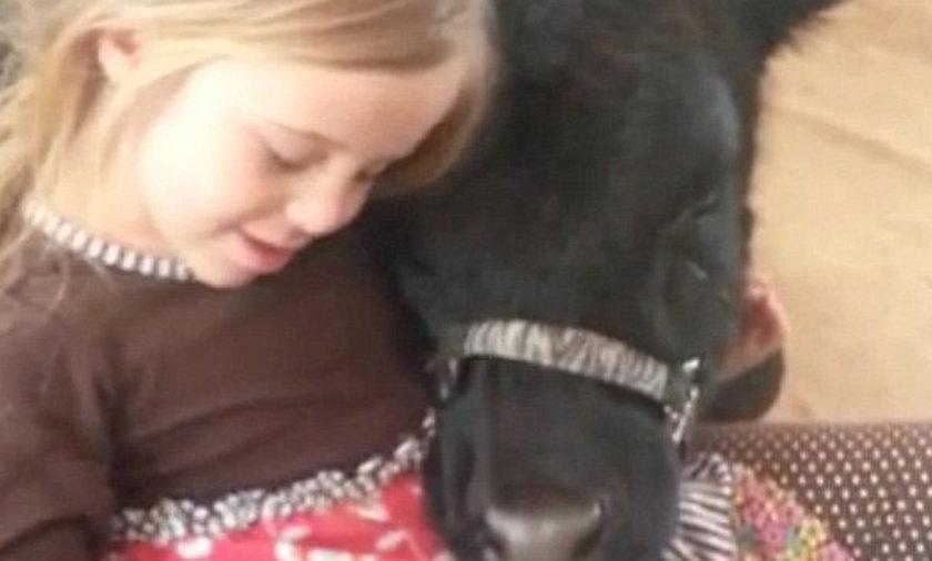 Dziewczynka przyprowadziła do domu krowę