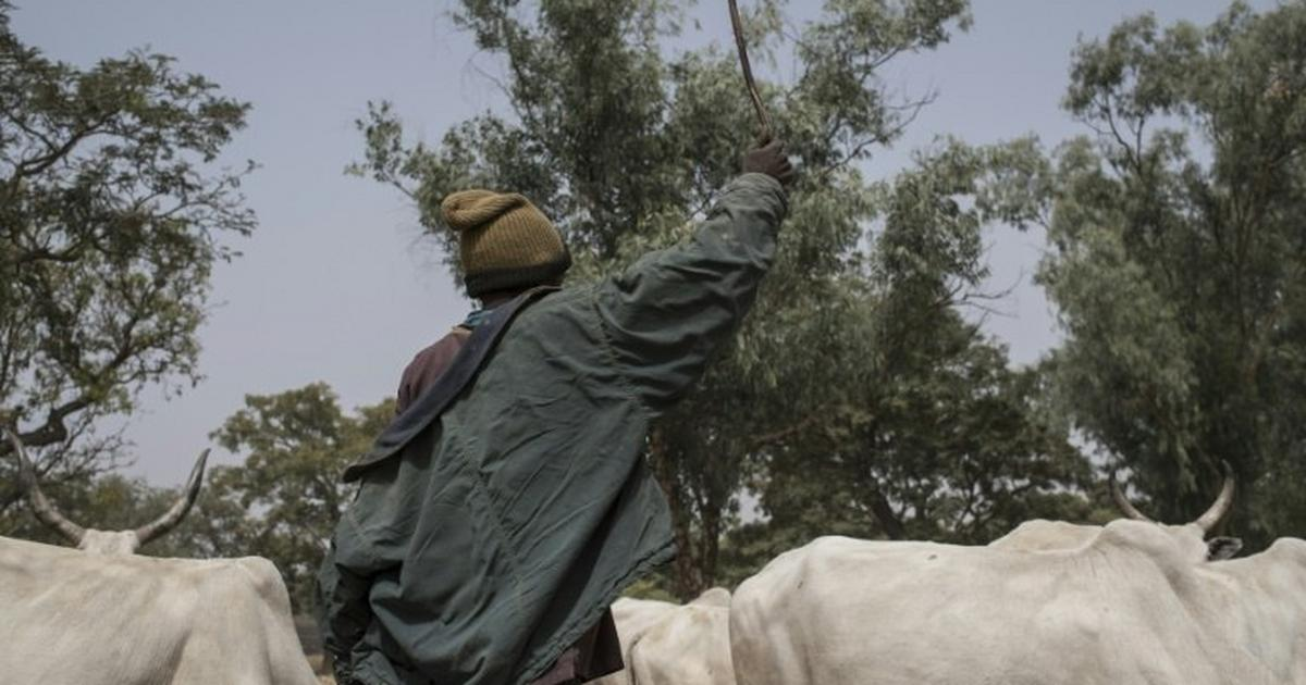 Police arraign 4 men for allegedly stealing four cows from Lagos market - Pulse Nigeria