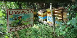 Zabiły go pszczoły, bo kradł im miód