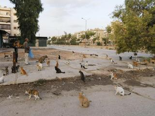 Cats that Alaa, an ambulance driver, feeds everyday in Masaken Hanano rest along a street in Aleppo