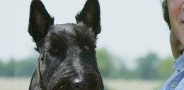 Ukochany pies prezydenta zdechł na raka