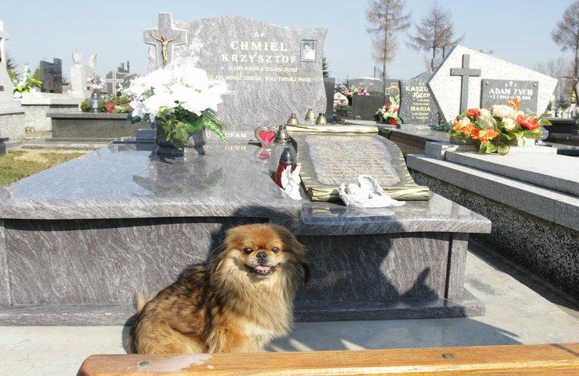 Wielka psia miłość