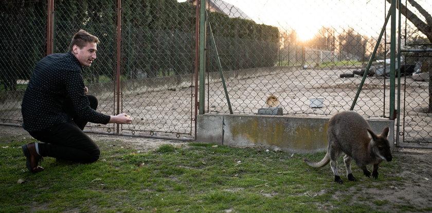 Radek hoduje kangura. Rico ma 10 miesięcy i jest wegetarianinem