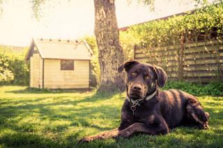 Kojec dla psów do rozbiórki. To samowola budowlana