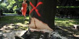 Kazał sciąć nasze drzewa