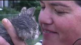 Kobieta ryzykowała życie, żeby uratować kociaka