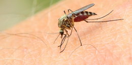 Plaga komarów w Polsce. To najlepsze sposoby na ukąszenia