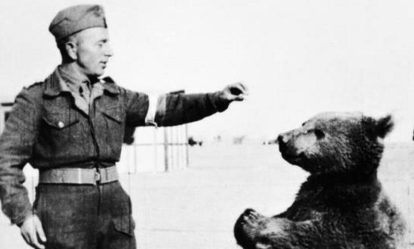 Niedźwiedź Wojtek będzie miał swoją ulicę?