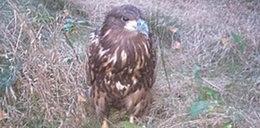 Policjanci złapali orła
