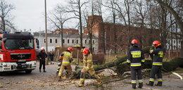 Drzewo runęło na ulicę w Łodzi. Cud,że nikt nie zginął