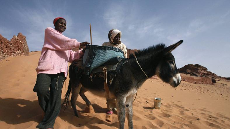 Uniwersalny, energooszczędny środek transportu. Niestety nie nadaje się na dalekie wyprawy w głąb pustyni