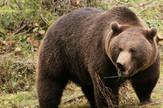 Medved uništio pčelinje košnice