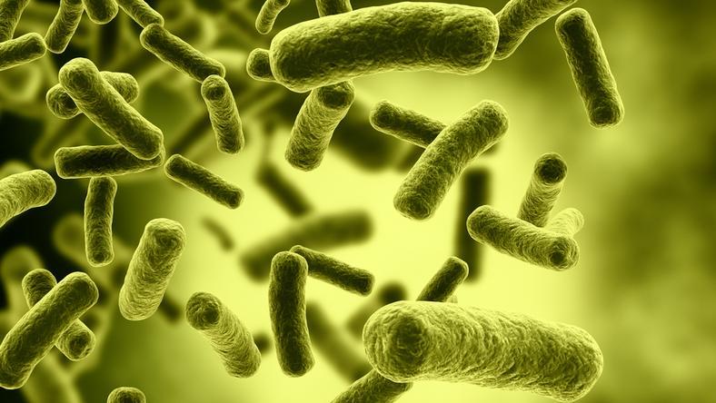 Coraz więcej zakażeń groźną bakterią New Delhi na Podlasiu