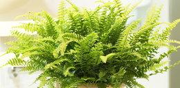 Wiesz, jak rośliny mogą oczyścić powietrze?