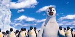 Czy pingwin może latać?