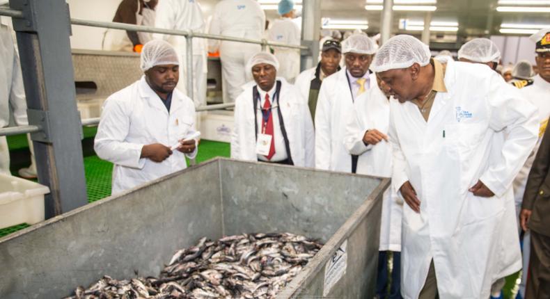 President Uhuru Kenyatta at Seaflower Pelagic Processing factory, Africa's biggest freezing factory.