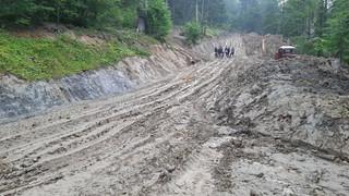Wycinka w Bieszczadach: Naukowcy przeciwko dewastacji przyrody w najcenniejszych lasach