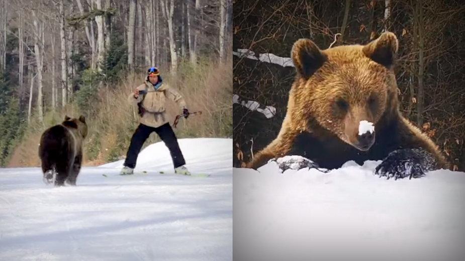 Rumunia: niedźwiedź gonił narciarza w ośrodku Predeal