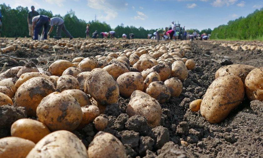 Lubisz ziemniaki? Sprawdź, jak je jeść żeby schudnąć