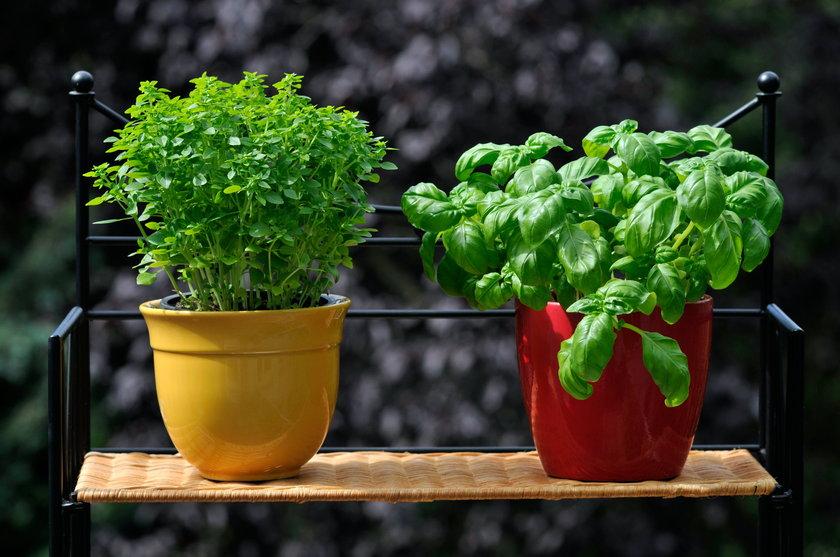 Zioła, które hodujesz w kuchni czy na balkonie mogą posłużyć ci jako składniki do domowej maseczki czy wywaru