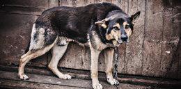 Będą emerytury dla zwierząt! Ustawa PiS ma polepszyć ich los