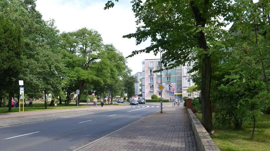 Drzewa w miastach pełnią bardzo ważne role - Peter Brewer/stock.adobe.com