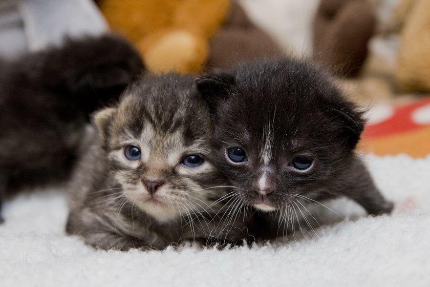 Są też kocięta