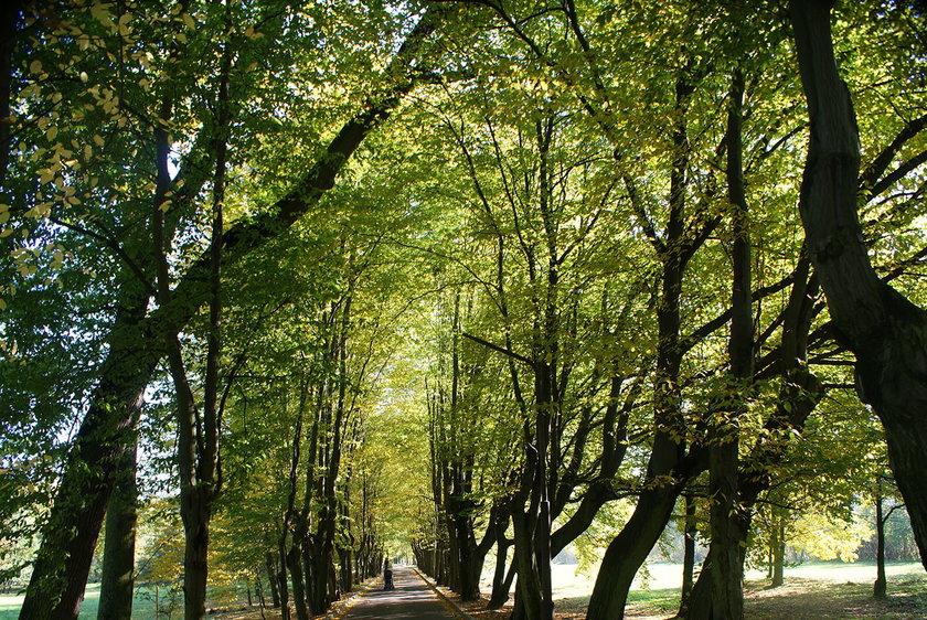 Podgrzewany park