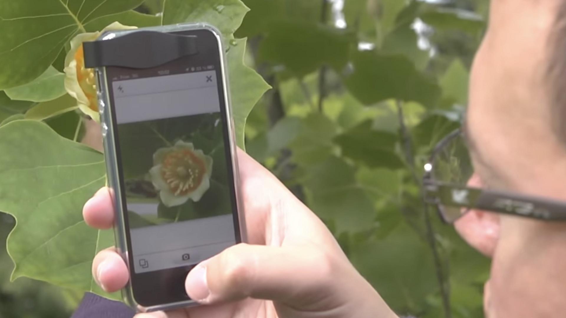 Pflanzen Erkennen Mit Einer Handy App Noizz