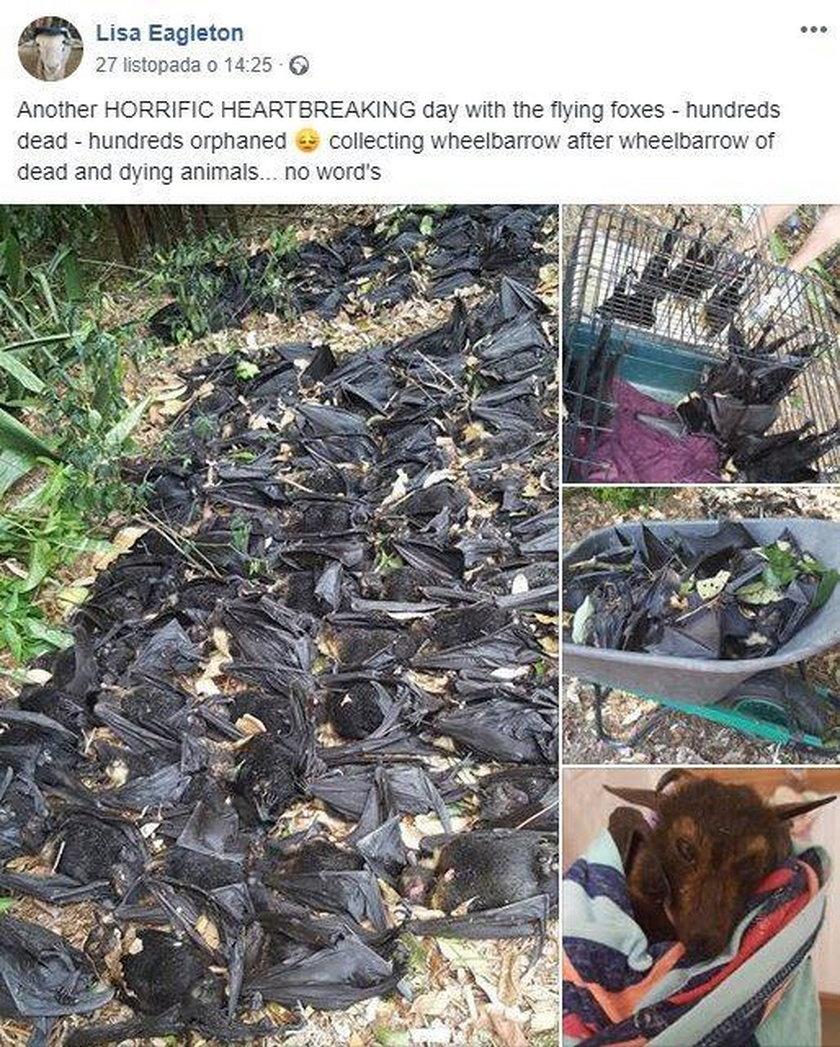 Ponad pięć tysięcy gnijących nietoperzy