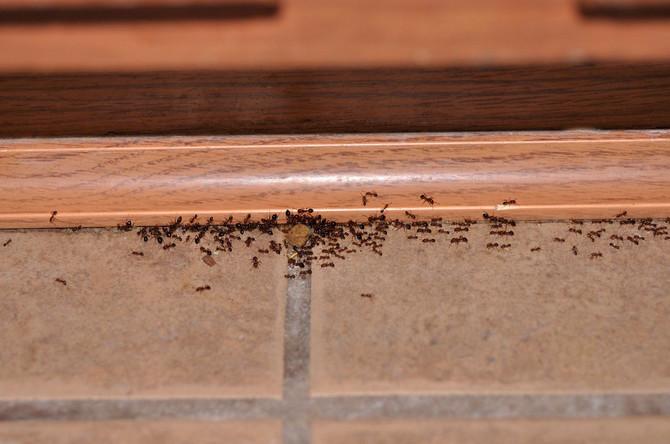 Da mravi postanu prošlost