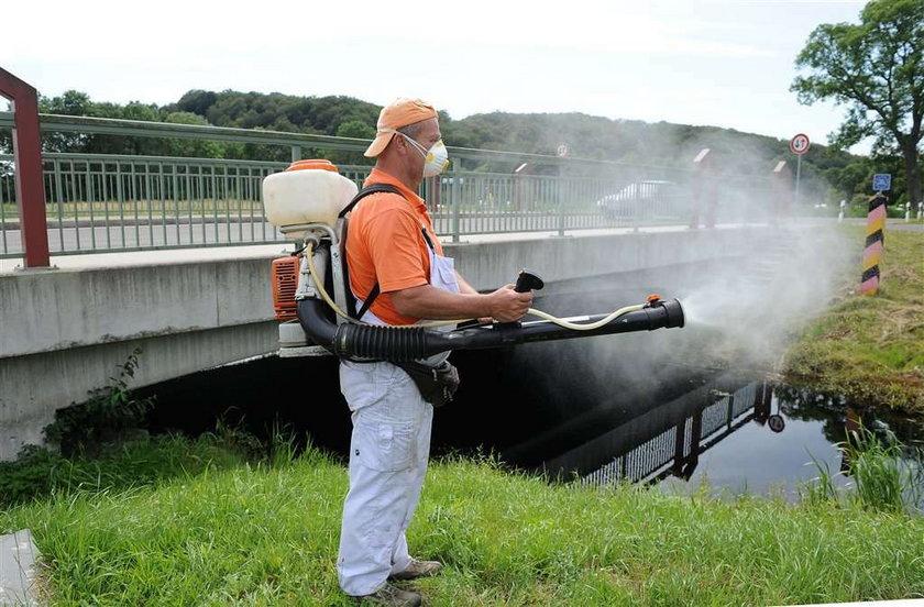 Groza na wakacjach. Atakują nas niemieckie komary!
