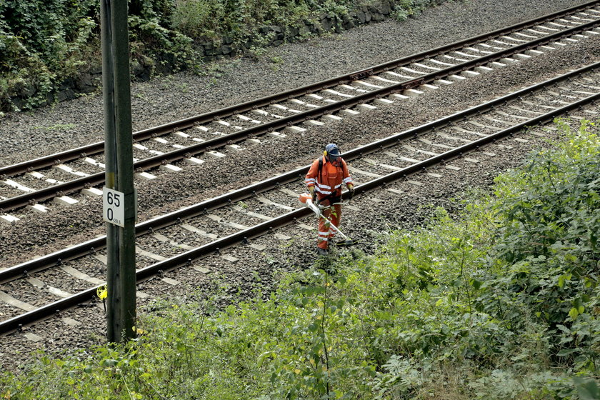 oczyszczanie terenu na 65. kilometrze trasy kolejowej Wrocław-Wałbrzych