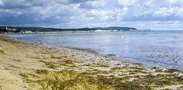 Zakwit sinic w Bałtyku. Absolutny zakaz wchodzenia do wody na 11 kąpieliskach