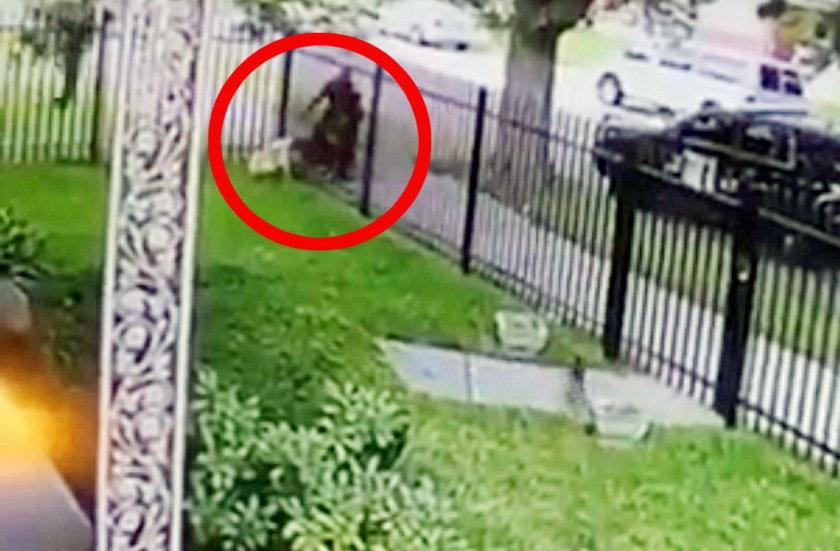 Policjant z zimąkrwiązabił psa! Fala oburzenia w sieci. Wstrząsający film