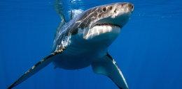 Fruwał nad morzem, gdy ugryzł go rekin! Ataki są tam niezwykle rzadkie