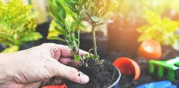 Rośliny, które warto sadzić jesienią