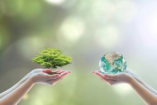 Podpórka dla domów z drewna, czyli inwestycje bardziej eko