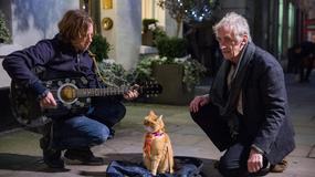 """""""Kot Bob i ja"""": koci czar!"""