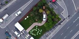 Škoda sadzi las na Placu Bankowym