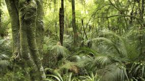 Naukowcy alarmują: amazońskie lasy tracą zdolność pochłaniania CO2