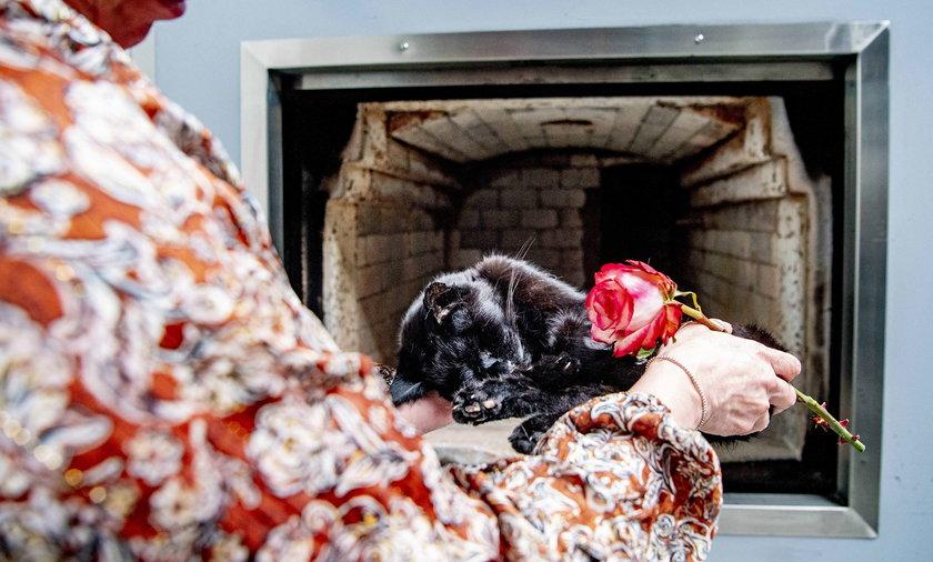 Krematoria dla zwierząt stają się coraz popularniejsze.