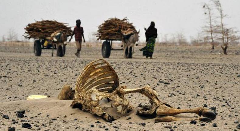 Ravaging drought in Kenya has killed 9