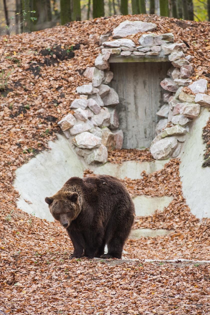 Niedźwiedź Misza