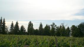Lubuskie promuje tradycje i Szlak Wina i Miodu