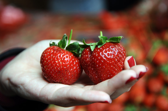Slasne jagode ali samo u domaćoj baštici