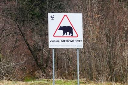 niedźwiedź bez siodełka orgia darmowe mobilne heban mamuśki porno