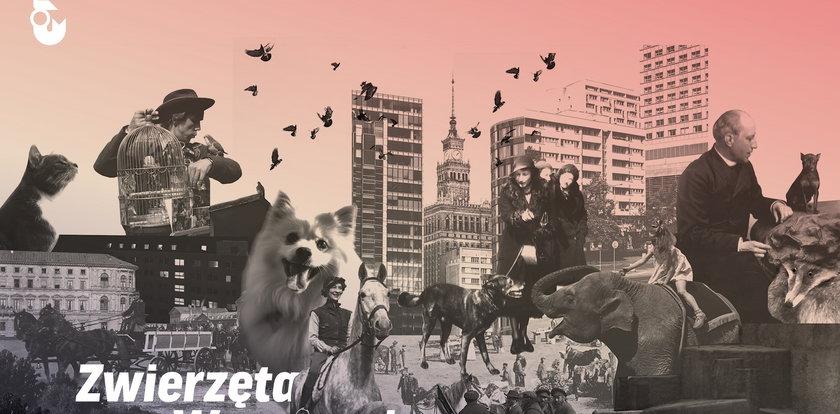 Takiej wystawy jeszcze w stolicy nie było! Warszawa z pazurem