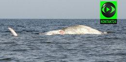 Co zrobić z martwym wielorybem?